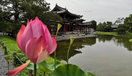 【京都厳選】地元民おすすめ観光スポットを紹介!穴場情報あり。