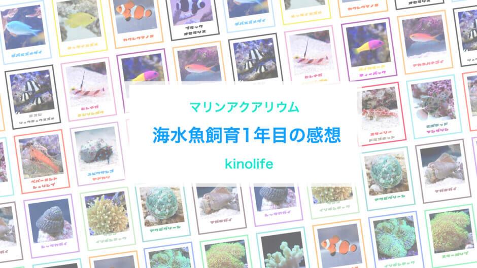 初心者海水魚飼育失敗成功マリンアクアリウム